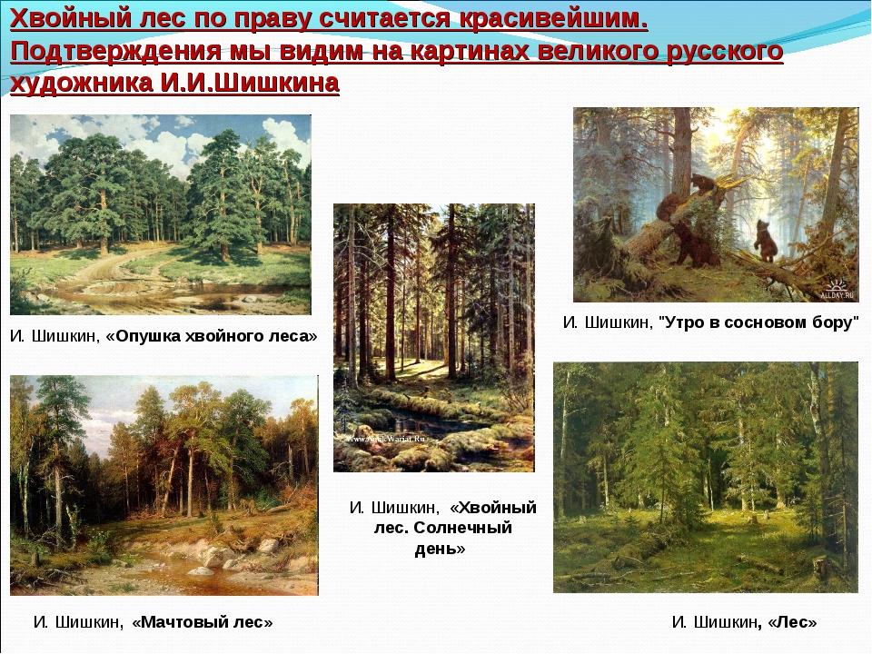 Хвойный лес по праву считается красивейшим. Подтверждения мы видим на картина...