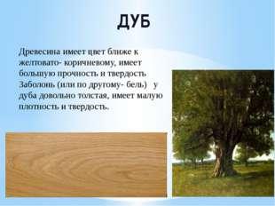 ДУБ Древесина имеет цвет ближе к желтовато- коричневому, имеет большую прочно