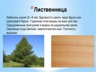 Лиственница Заболонь узкая (2—3 см), буроватого цвета, ядро бурое или краснов
