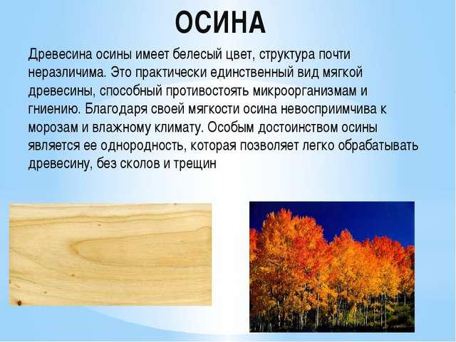 ОСИНА . . Древесина осины имеет белесый цвет, структура почти неразличима. Эт...