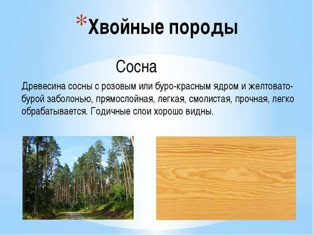 Хвойные породы Сосна Древесина сосны с розовым или буро-красным ядром и желто...