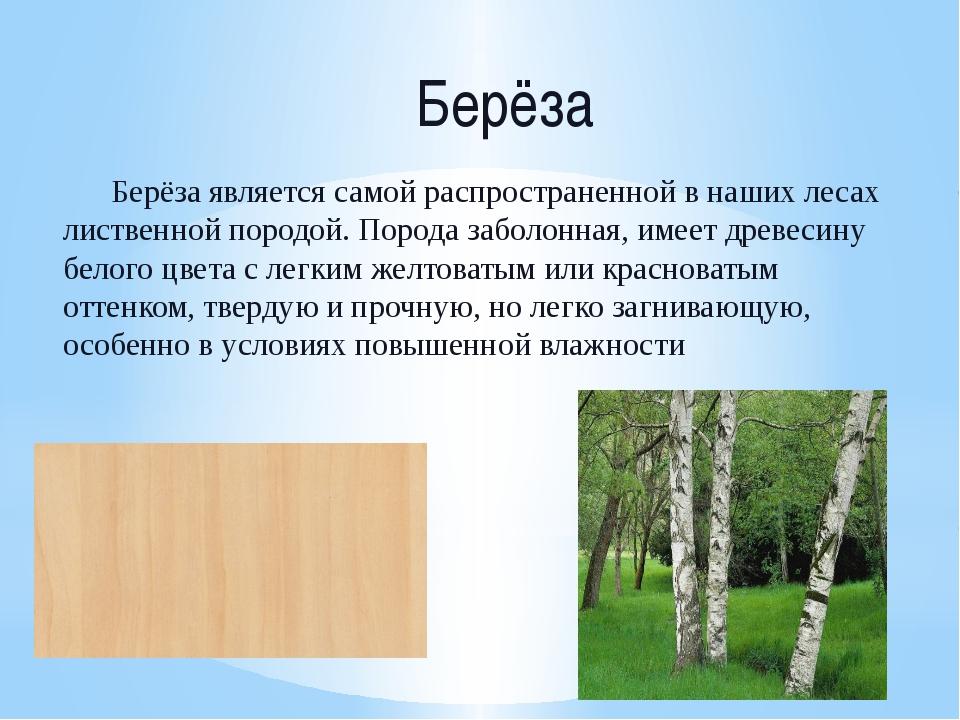 Берёза Берёза является самой распространенной в наших лесах лиственной породо...
