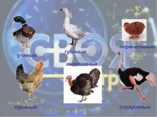 гусиные утиные индюшачьи перепелиные куриные страусиные