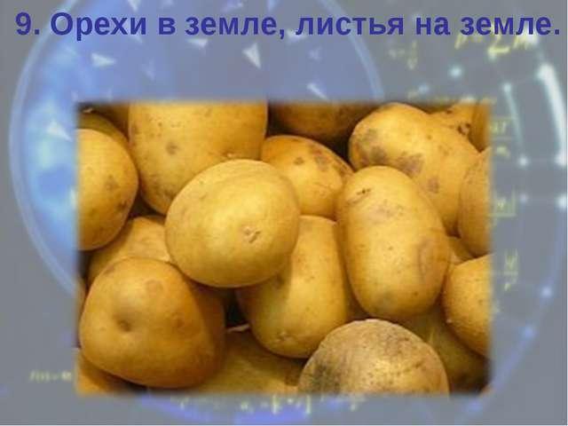 9. Орехи в земле, листья на земле.