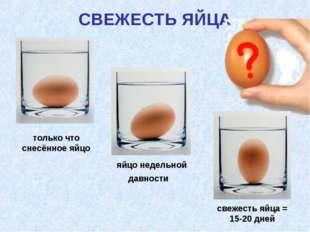 СВЕЖЕСТЬ ЯЙЦА яйцо недельной давности свежесть яйца = 15-20 дней только что с