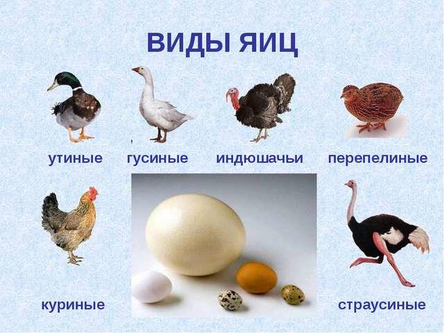 ВИДЫ ЯИЦ гусиные утиные индюшачьи перепелиные куриные страусиные