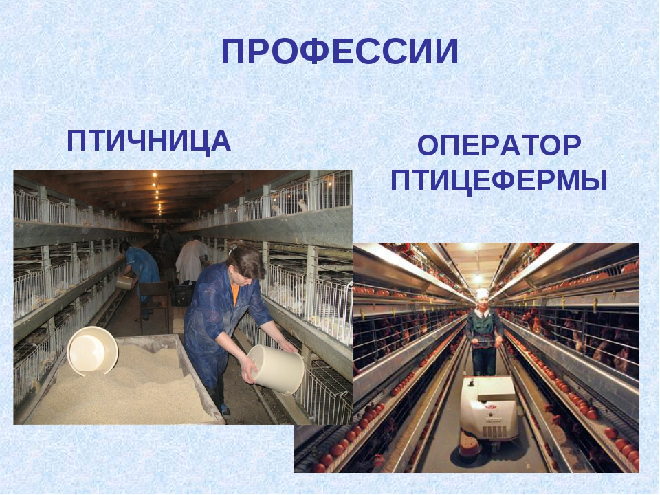 ПРОФЕССИИ ОПЕРАТОР ПТИЦЕФЕРМЫ ПТИЧНИЦА
