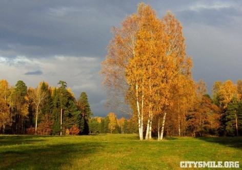Обои Времена года Осень Россия Санкт-Петербург Павловск Прир…
