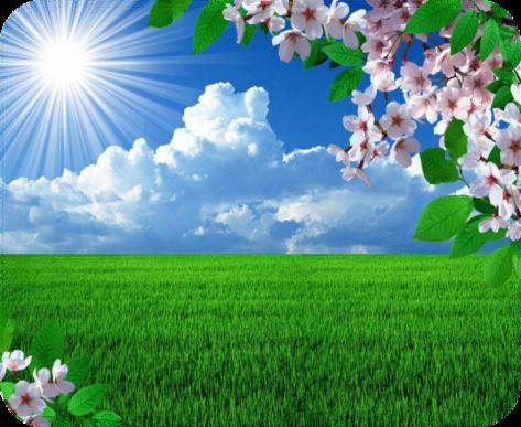 1366x768 весна, ветки, вишня, солнце, цветение, поле картинки на рабочий стол обои фото скачать