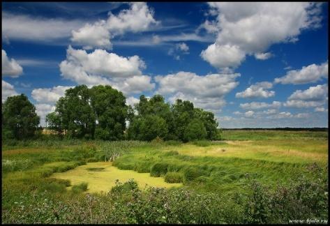 Просмотр фотографии - Природа центральной России Категория -…