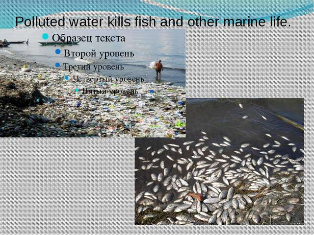 Polluted water kills fish and other marine life.