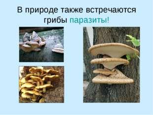 В природе также встречаются грибы паразиты!