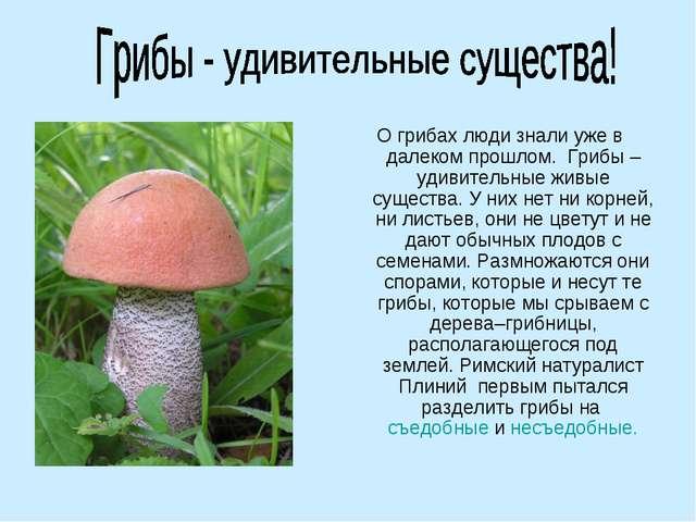О грибах люди знали уже в далеком прошлом.Грибы – удивительные живые сущест...