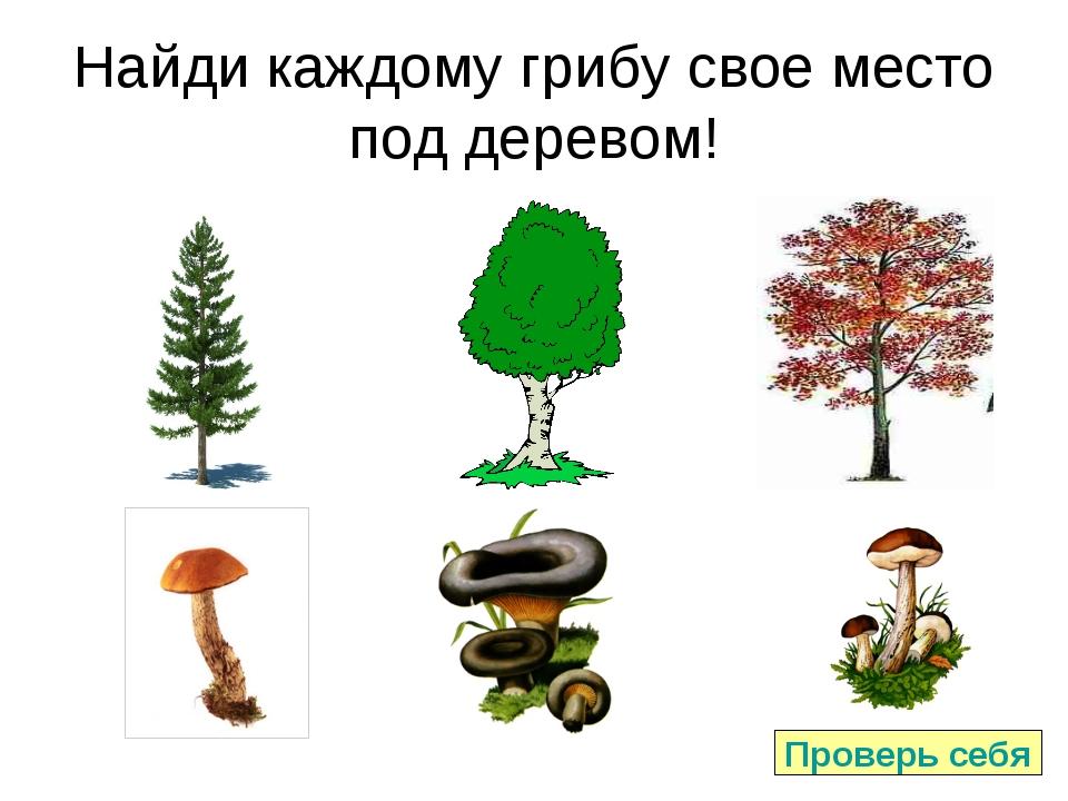 Найди каждому грибу свое место под деревом! Проверь себя