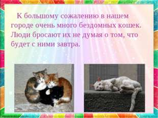 К большому сожалению в нашем городе очень много бездомных кошек. Люди бросаю