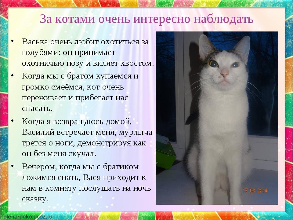 За котами очень интересно наблюдать Васька очень любит охотиться за голубями:...