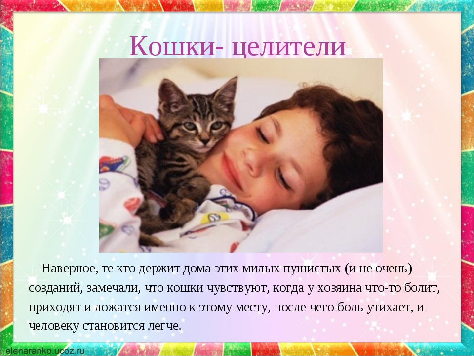 Кошки- целители Наверное, те кто держит дома этих милых пушистых (и не очень)...