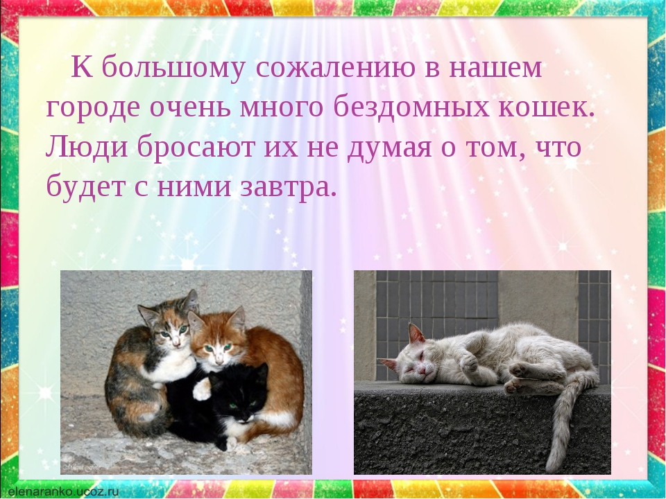 К большому сожалению в нашем городе очень много бездомных кошек. Люди бросаю...