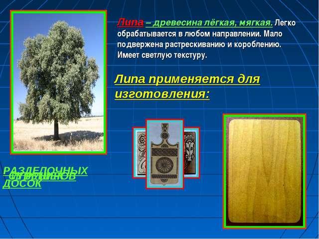 Липа – древесина лёгкая, мягкая. Легко обрабатывается в любом направлении. Ма...