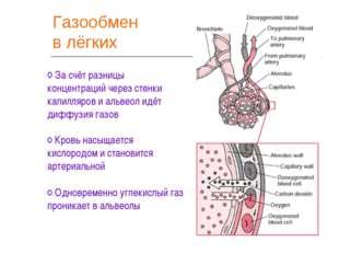 Газообмен в лёгких За счёт разницы концентраций через стенки капилляров и аль