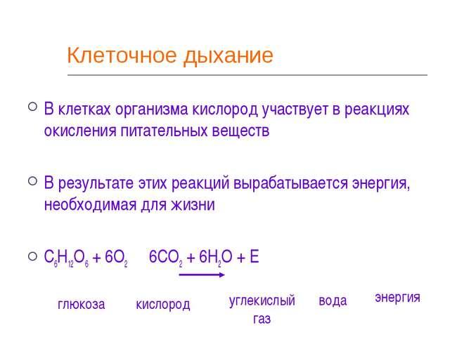 Клеточное дыхание В клетках организма кислород участвует в реакциях окисления...