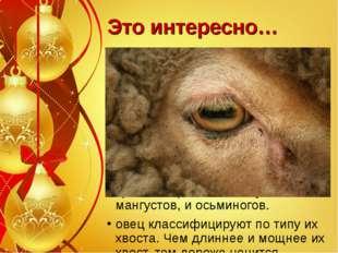 Это интересно… Овцы предпочитают проточную воду, когда пьют. Овцы отличаются