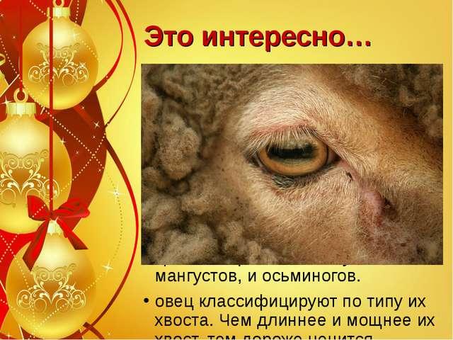 Это интересно… Овцы предпочитают проточную воду, когда пьют. Овцы отличаются...