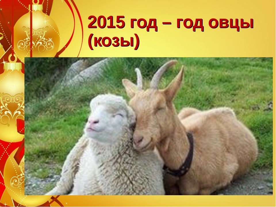 2015 год – год овцы (козы)