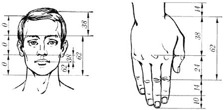 Золотое сечение. Золотые пропорции в частях тела человека