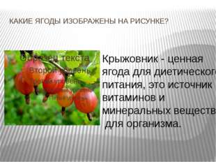 КАКИЕ ЯГОДЫ ИЗОБРАЖЕНЫ НА РИСУНКЕ? Крыжовник - ценная ягода для диетического