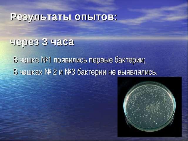 В чашке №1 появились первые бактерии; В чашках № 2 и №3 бактерии не выявляли...
