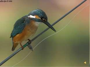 Природа – это всё вокруг И человек, зверь, и птица. Так сохраним её, мой дру