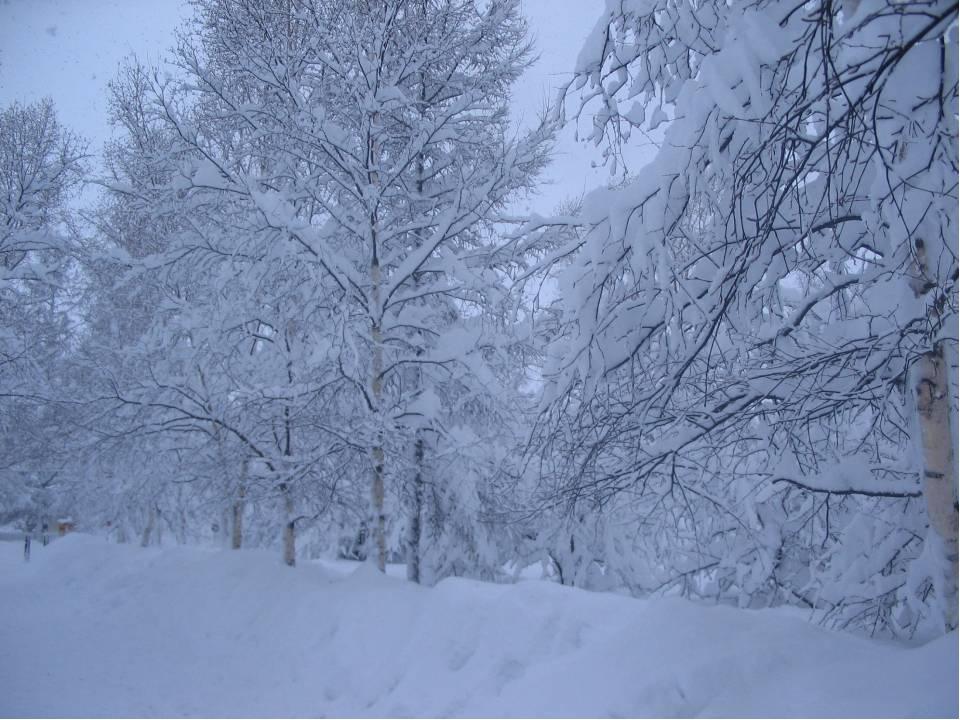 Декабрь год кончает, зиму начинает Январь – году начало, зиме середина Феврал...