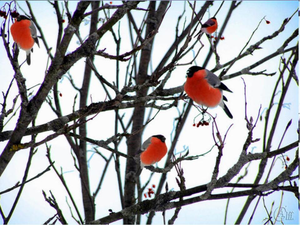 Чернокрылый, красногрудый, Не боится он простуды — С первым снегом Тут как тут!