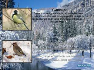 Синица Синица — оседлая птица, и лишь частично она кочует. Весной возвращаетс