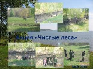 Акция «Чистые леса» Май 2013
