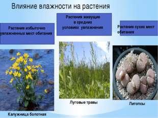 Растения избыточно увлажненных мест обитания Влияние влажности на растения Р