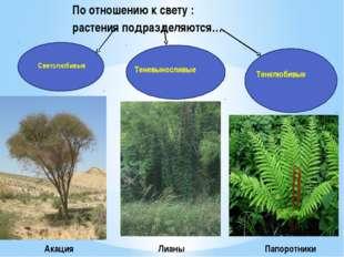 По отношению к свету : растения подразделяются…. Светолюбивые Тенелюбивые Тен