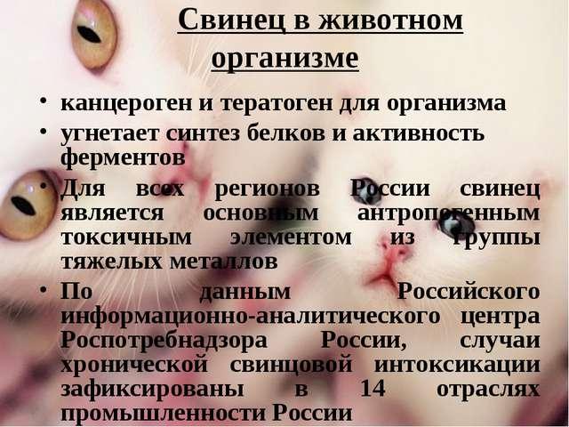Свинец в животном организме канцероген и тератоген для организма угнетает си...