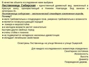 В качестве объекта исследования нами выбрана Лиственница Сибирская – единстве