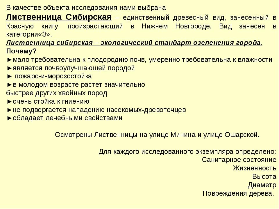 В качестве объекта исследования нами выбрана Лиственница Сибирская – единстве...