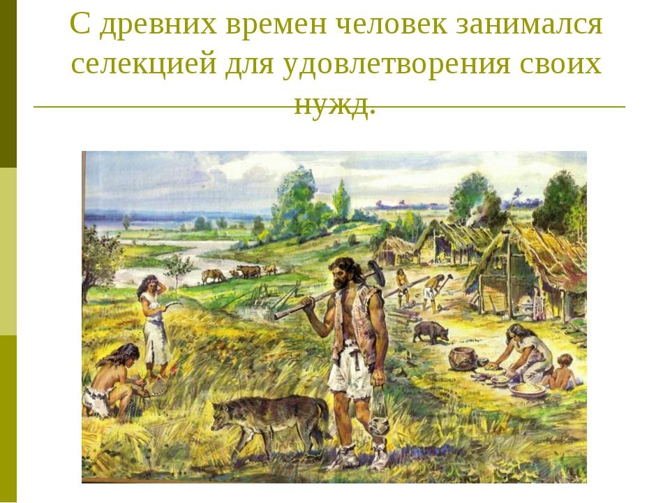 С древних времен человек занимался селекцией для удовлетворения своих нужд.