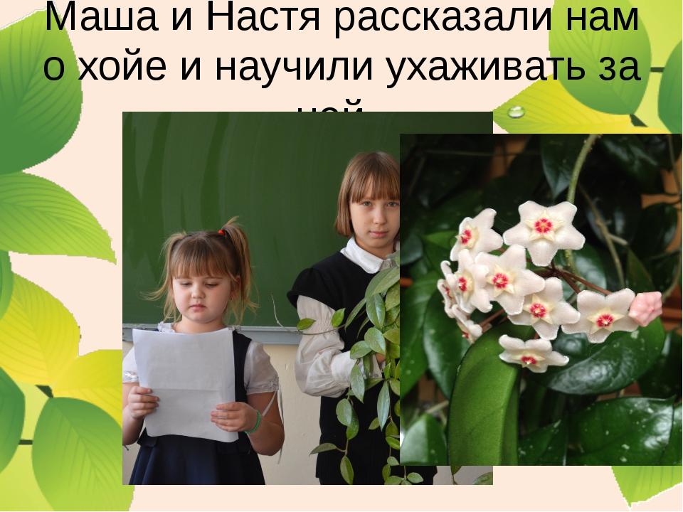 Маша и Настя рассказали нам о хойе и научили ухаживать за ней.