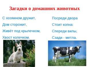 Загадки о домашних животных С хозяином дружит, Дом сторожит, Живёт под крылеч