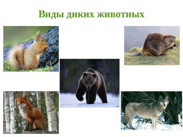Виды диких животных