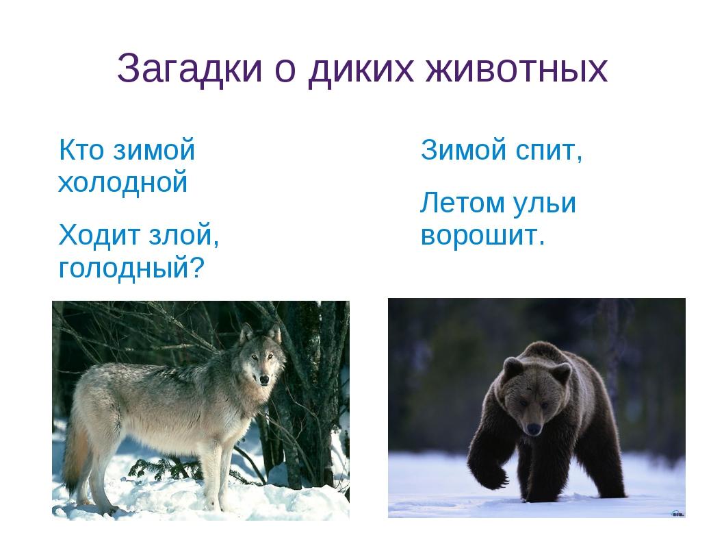 Загадки о диких животных Кто зимой холодной Ходит злой, голодный? Зимой спит,...