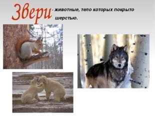 - животные, тело которых покрыто шерстью.