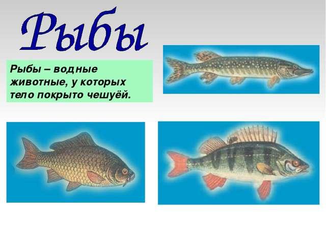 Рыбы – водные животные, у которых тело покрыто чешуёй.
