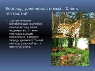 Леопард дальневосточный. Олень пятнистый Субтропическую составляющую комплекс