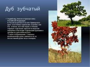 Дуб зубчатый Редкий вид. Внесен в Красную книгу Российской Федерации. В Росси